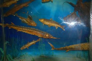 Морская фауна Азовского моря